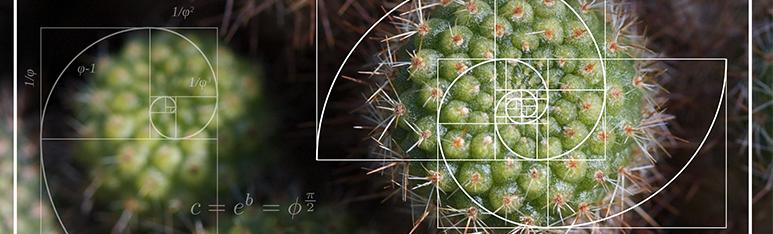 Les maths sont dans la Nature !
